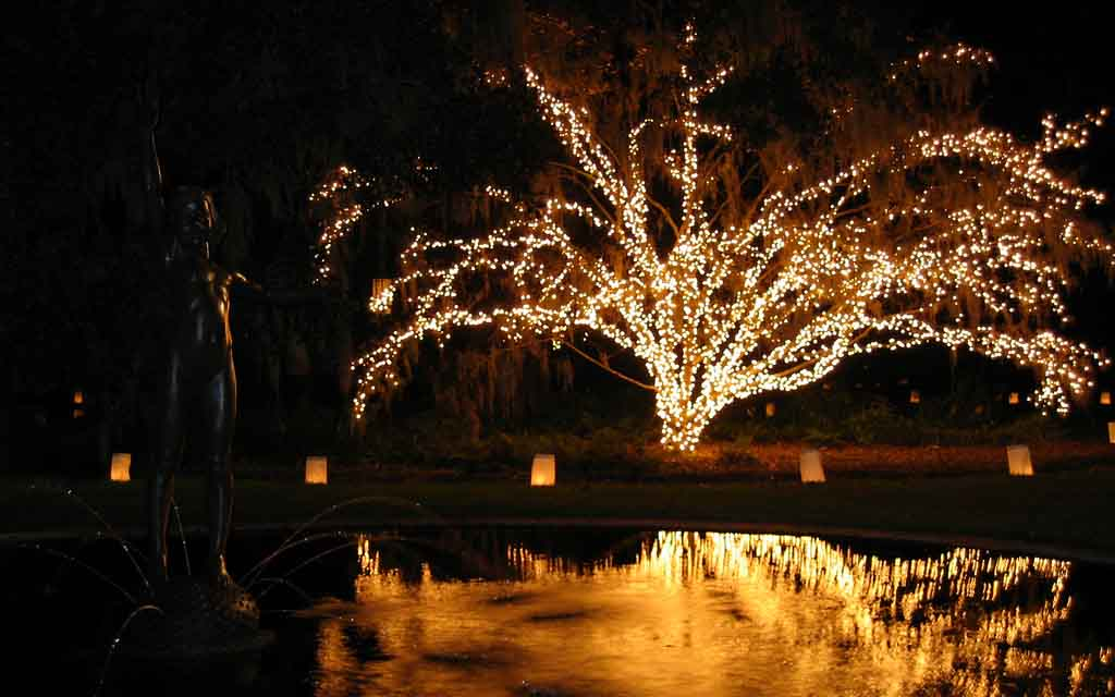 Tree decorated with lights at Brookgreen Gardens