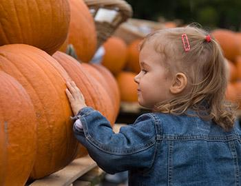 Little girl enjoying looking at pumpkins at the Harvest Home Festival