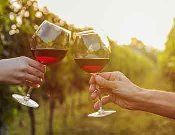 Two people drinking wine in a vineyard